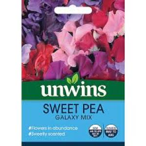Sweet Pea Galaxy Mixed  Per Pack