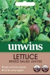 Lettuce Mixed Salad Leaves  Per Pack