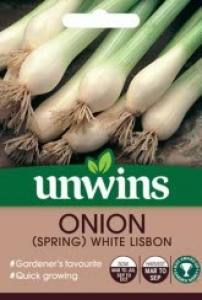 Onion Spring White Lisbon  Per Pack