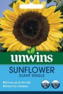 Sunflower Giant Single  Per Pack