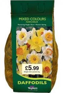 Narcissus Mix  2KG  Each