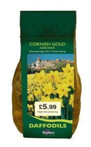 Narcissus Cornish Gold  2KG Each