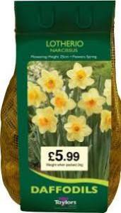 Narcissus Lotherio  2KG  Each