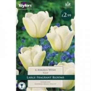 Tulip Angles Wish Each