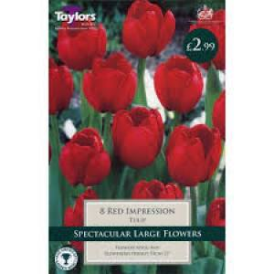 Tulip Red Impression  Each