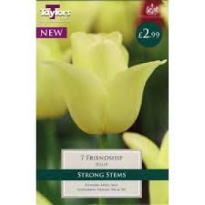 Tulip Friendship  Each