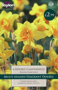 Narcissi Double Campernelle  Each