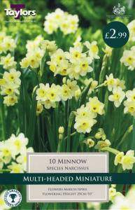 Narcissi Minnow  Each