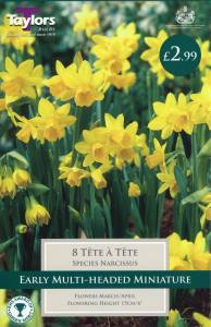 Narcissi Tete A Tete  Each
