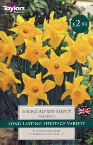 Narcissi King Alfred Select  Each