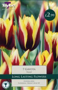 Tulip Gavota Each