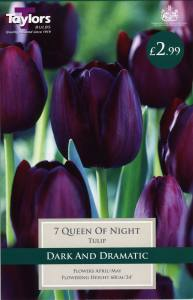 Tulip Queen of Night Each