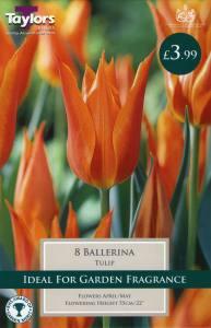 Tulip Ballerina  Each