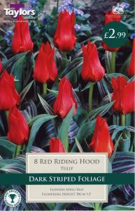 Tulip Red Ridding Hood  Each