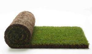 Turf Cultivated