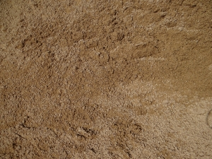 Sand Sharp